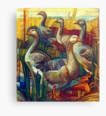goose lombardella  (anser albifrons) Canvas Print