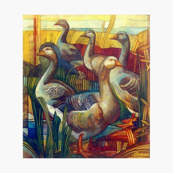 goose lombardella  (anser albifrons) Photographic Print