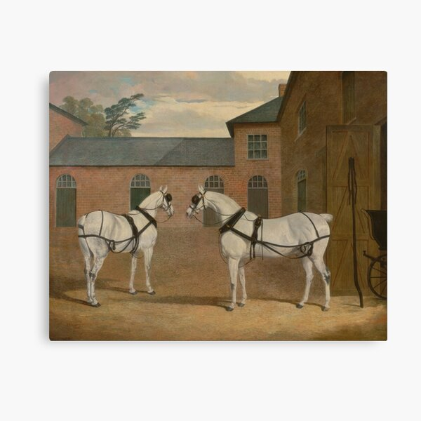 Grey Carriage Horses in The Coachyard - Herring Canvas Print