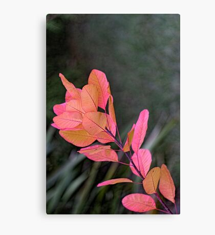Autumn is Pink Canvas Print
