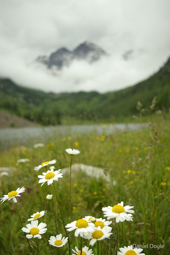 Daisy Mountain Top by Daniel Doyle