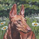 Cirneco Dell'Etna Dog Fine Art Painting by lashepard