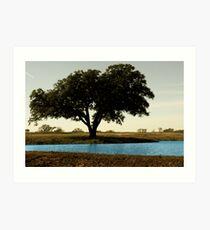 Tree by Pond Art Print