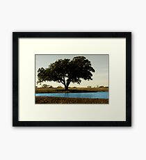 Tree by Pond Framed Print