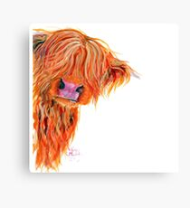 HIGHLAND COW 'PEEKABOO' BY SHIRLEY MACARTHUR Canvas Print