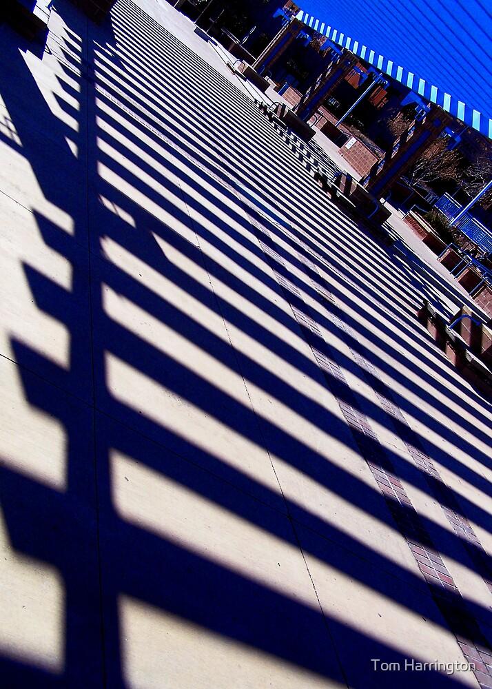Shadowplay by Tom Harrington