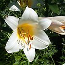 Oriental Lilly by wolftinz
