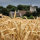The wheat field by JEZ22