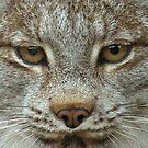 Lynx Face by starbucksgirl26