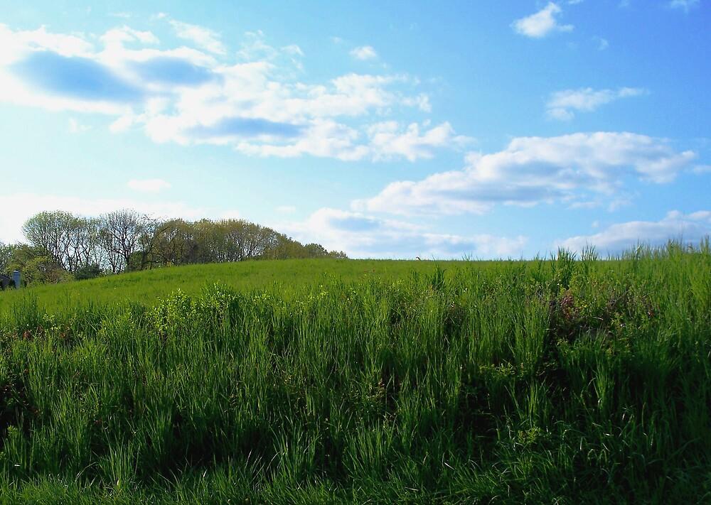 Grassy meadow by Judi Taylor