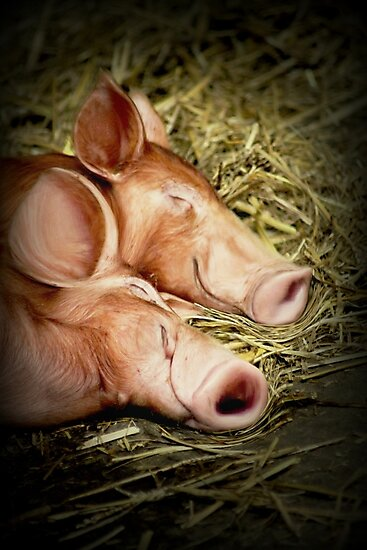 Perfectly Peaceful Piglets by Ladymoose