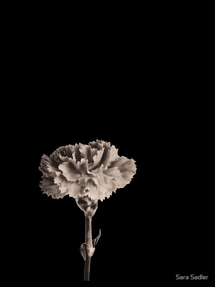Antique Carnation by sadler2121