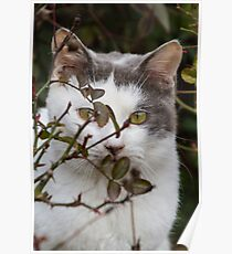 cute cat in the garden Poster
