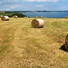 Harvest time on the Roseland peninsula Cornwall   by eddiej