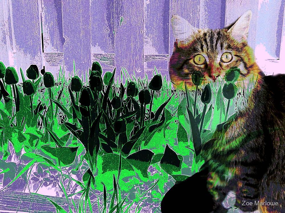Feline Blend by Zoe Marlowe