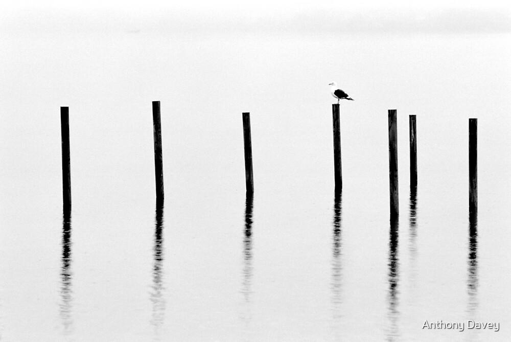 Rest by Anthony Davey