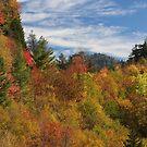 Fabulous Fall II by Gary L   Suddath