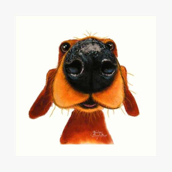 NOSEY DOG 'NOSEY NANDO' BY SHIRLEY MACARTHUR Art Print