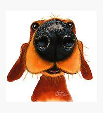 NOSEY DOG 'NOSEY NANDO' BY SHIRLEY MACARTHUR Photographic Print
