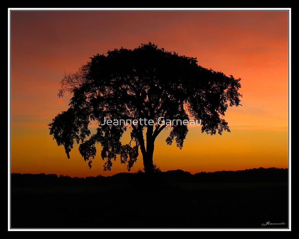 Another Morning Glow by Jeannette Garneau