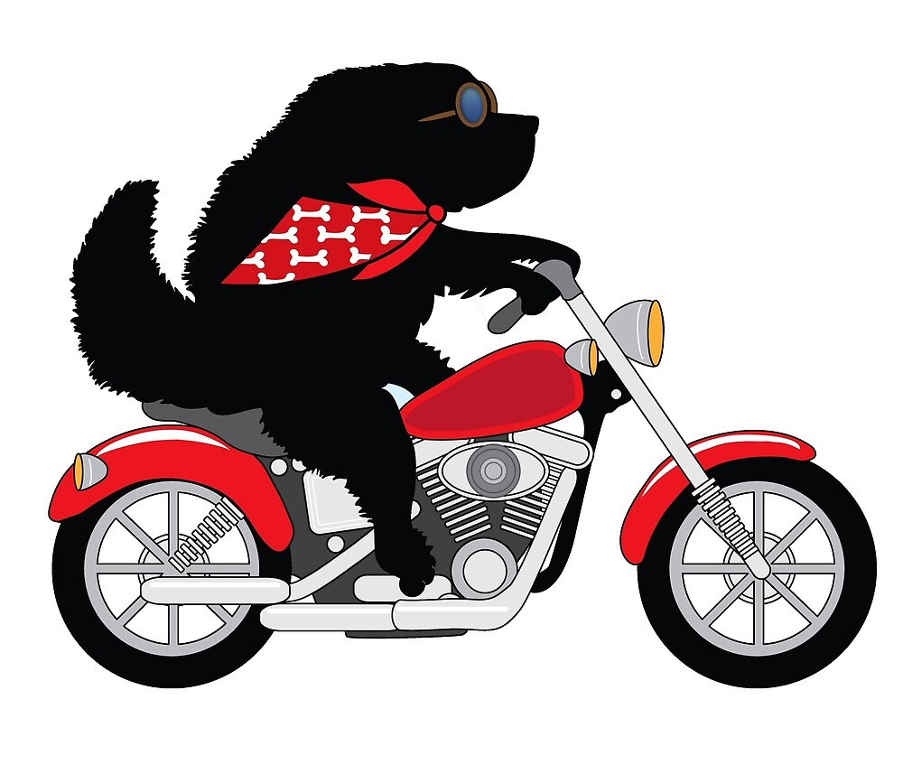 Just a Newfie Riding a Motorcycle by Christine Mullis