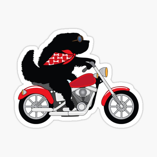 Just a Newfie Riding a Motorcycle Sticker
