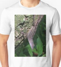 Brown anole T-Shirt