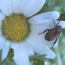 Bug and a Droplet by lindsycarranza