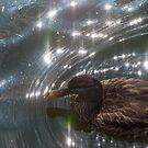 Duck Soupanova by JohnYoung