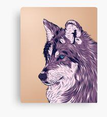 Blue eyed wolf Canvas Print