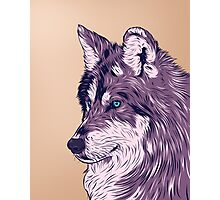 Blue eyed wolf Photographic Print