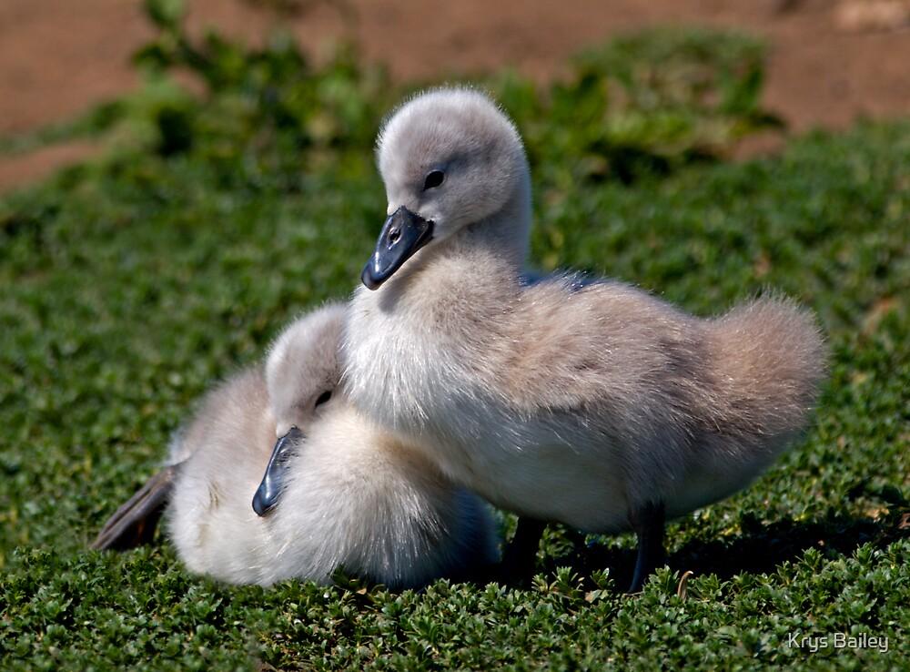 Ugly Ducklings? by Krys Bailey