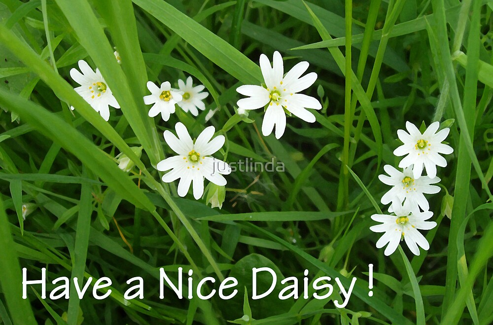 Have a Nice Daisy  by justlinda