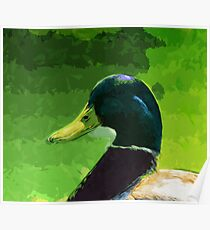 Male Mallard Duck Abstract Impressionism Poster