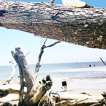 Daydreams and Driftwood by sethweaver