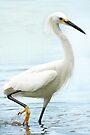 Egret by Betsy  Seeton