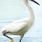 Egret by Betsy  Seeton
