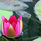 Beauty Unfolding - Vibrant Pink Water Lily Bud von BlueMoonRose