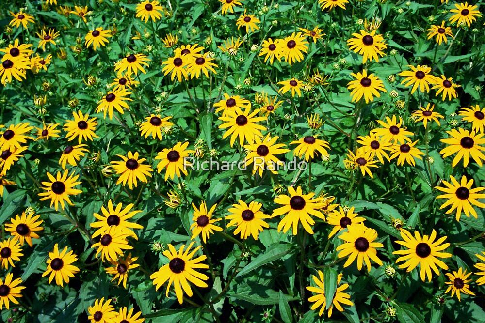 Yellow Flower Fever by Richard Rando