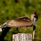 Pelican Pilates by Jonicool