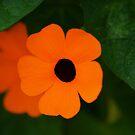 Orange by Richard G Witham