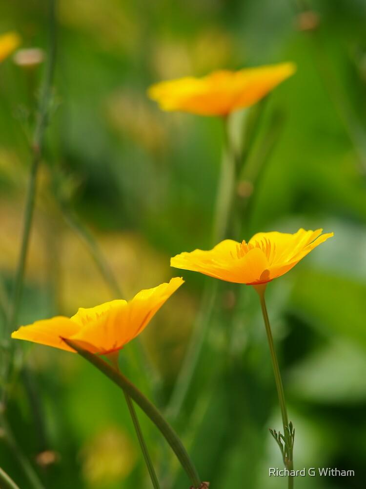 Shades of Orange by Richard G Witham