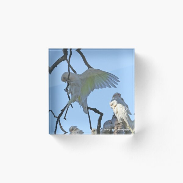 Little Corella  (1055) Acrylic Block
