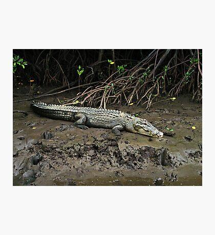 Crocodile - Chinaman Creek - Cairns Photographic Print
