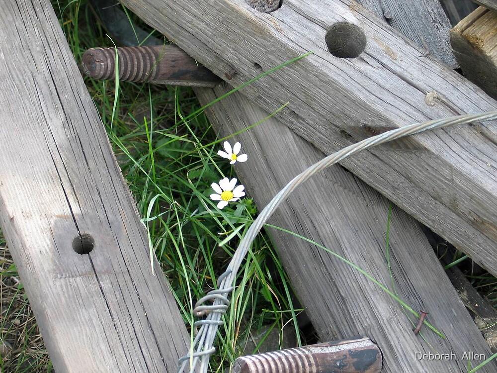 Little Flower by Deborah  Allen