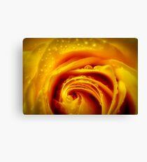yellow glow rose macro Canvas Print