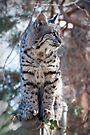 Alert kitty by Eivor Kuchta