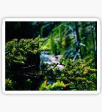 Pine Needles Sticker
