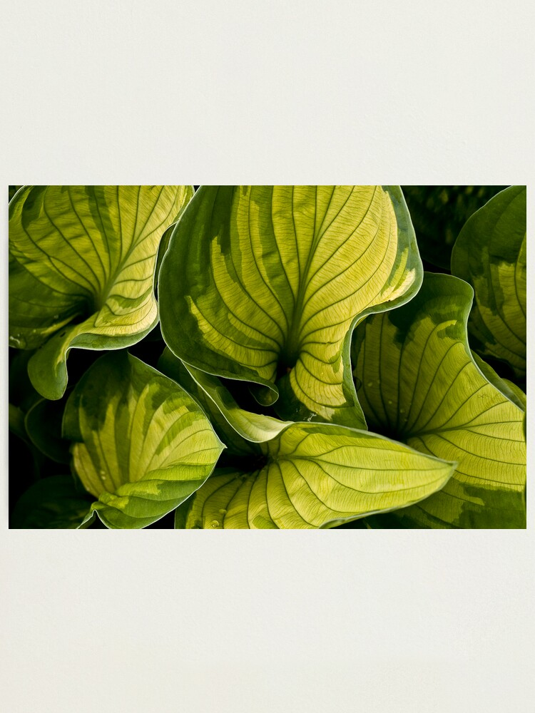 Alternate view of Twisted Greenery Photographic Print