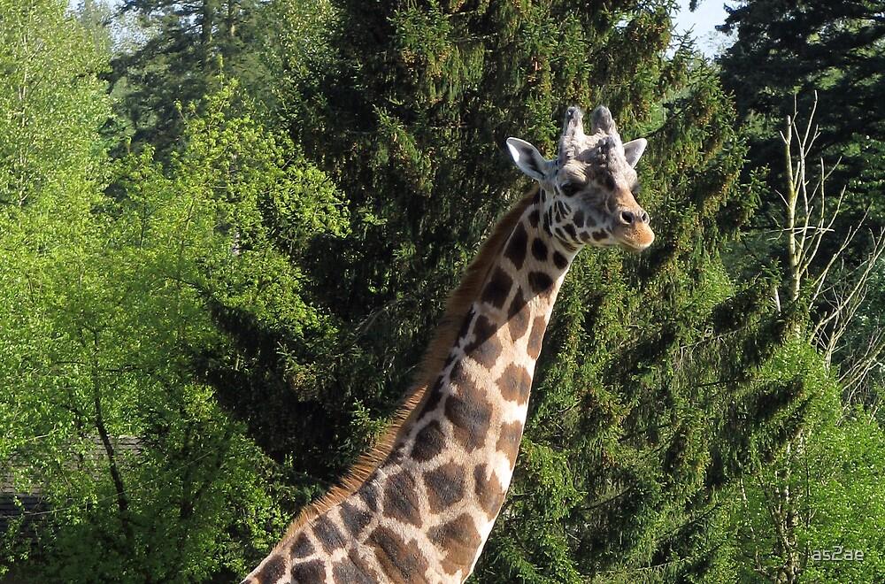 giraffe by as2ae